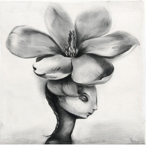 Magnolijas dārgums